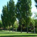 KMP Park